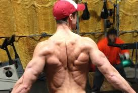 oh tree a killer lower back workout strength