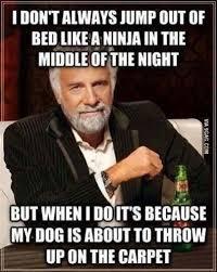 Vomit Meme - dog is about to vomit humour pinterest dog