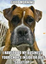 boxer dog meme 21 funny good morning memes to start off your day