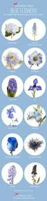 the 25 best blue flower names ideas on pinterest blue names