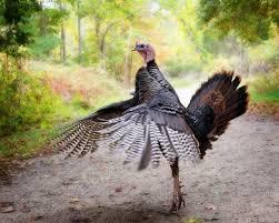 les 25 meilleures idées de la catégorie when is thanksgiving sur