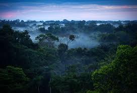 amazon rainforest native plants amazon rainforest by daniel moore