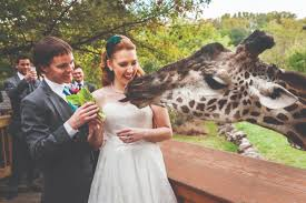 akron wedding venues akron wedding venues reviews for venues
