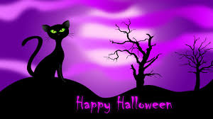 halloween black background pumpkin halloween cats and kittens happy halloween cat halloween