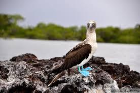 sherri jo u0027s tour galapagos islands 5