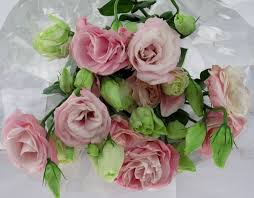 lisianthus flower mariachi pink lisianthus flowers and fillers flowers by