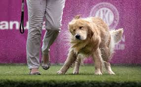 american kennel club dog show at greensboro coliseum news