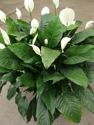 potted tropical plants home design ideas