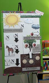 Active Anchor Chart Nitrogen Cycle Anchor Charts Cycling And