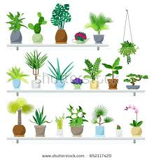best indoor house plants indoor plants trees types air purifying plants air cleaning plants