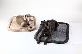 tough dog beds best indestructible dog beds is there really a chew proof dog bed