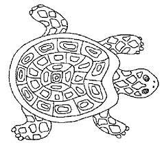 Coloriage tortue De Terre  Artemiaorg