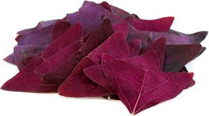 purple butterfly sorrel leaves information and facts