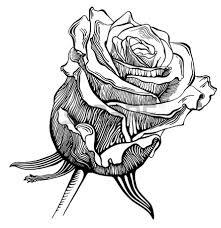 rose sketch black and white clipart library clip art library