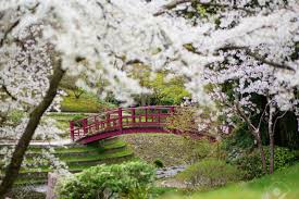 colorado u s japanese gardens japanese garden cherry blossom home design ideas