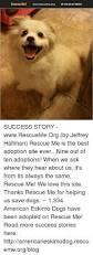 american eskimo dog calgary 25 best memes about eskimos eskimos memes
