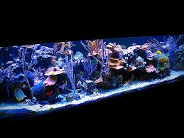 Floating Aquascape Reef2reef Saltwater And Reef Aquarium Forum - build your own rock for practically free reef2reef saltwater and