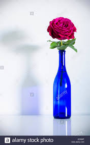 Blue Bottle Vase A Red Rose With Green Leaves In A Blue Bottle Stock Photo Royalty