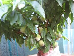 best place to buy fruit trees littlebubble me