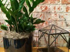 What Is An Indoor Garden Called - great indoor trees hgtv