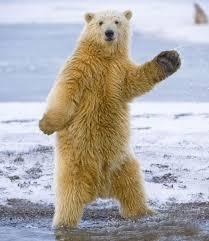 Dancing Bear Meme - dancing bear blank template imgflip