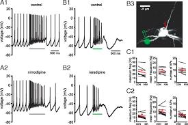 cellular mechanisms underlying burst firing in substantia nigra