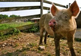endorsements citizens for farm animal protection