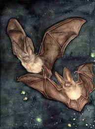bats in the night u0027 original watercolour by zoe spencer sold