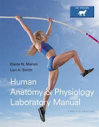 Principles Of Anatomy And Physiology Ebook Martini Nath U0026 Bartholomew Fundamentals Of Anatomy U0026 Physiology