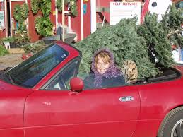 cut your tree and get it home any way you can helvetia