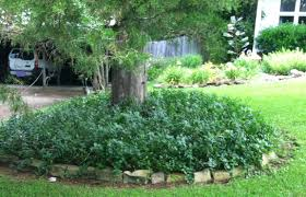 landscape solutions for the base of trees