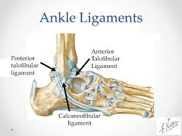 Anterior Tibiofibular Ligament Injury Foot U0026 Ankle Injuries Kylee Phillips Md Mba Clinical Instructor
