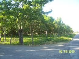 500 Sqm Magpapalayok San Leonardo Nueva Ecija For Sale Lot Land Farm