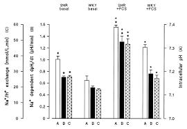 na h exchanger isoform 1 phosphorylation in normal wistar kyoto