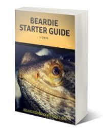 bearded dragon lighting guide the ultimate bearded dragon lighting guide bearded dragon tank