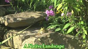 why plant native plants edge of the woods nursery why native plants youtube