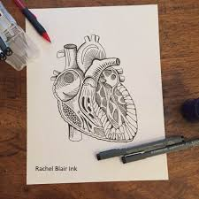 coloring page heart anatomy
