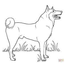 Coloring Pages Of Dogs 929 Dogs Color Pages
