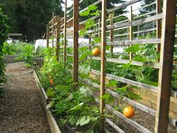 wood trellis plans garden trellis for cucumbers and melons