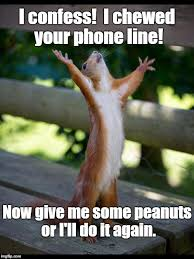 Dramatic Squirrel Meme - blackmail squirrel style imgflip