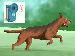 3 ways to keep dogs off lawn wikihow