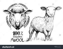 sketch lamb sheep hand drawn illustration stock vector 692145877