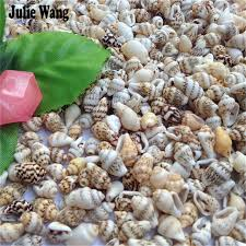 assorted seashells julie wang assorted seashells mini conch shell 50pcs lot