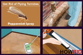 Winged Termites In Bathroom How To Get Rid Of Flying Termites Winged Termites