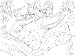 koala and joey coloring page free printable coloring pages