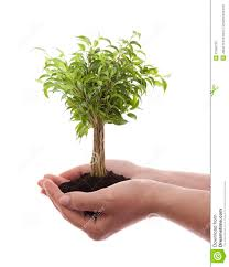 holding green tree stock photography image 27509732