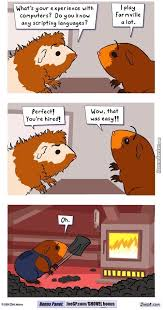 Guinea Pig Meme - guinea pig memes best collection of funny guinea pig pictures