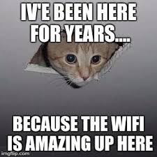 Ceiling Cat Meme - ceiling cat meme imgflip