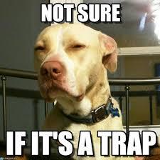 It S A Trap Meme - not sure suspicious dog meme on memegen
