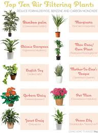 best plants for air quality 6 house plants that clean your air plants air filtering plants